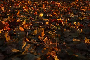 Autumn Leaves Deciduous Ground Surfa