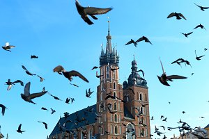 Birds, Krakow, Poland