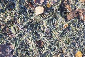 Frozen Forest Grass Texture