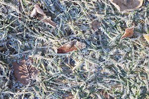 Frost Grass Texture Background.