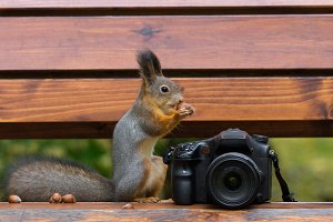Squirrel sits on the camera