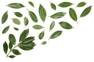 laurel isolated on white background with copy space for your text. Fresh bay leaves. Top view. Flat lay pattern