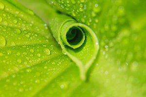 Green leaf with dew