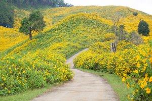 Middle Road flower field
