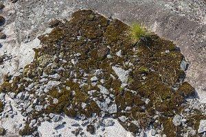 Moss and lichen on a granite rock.