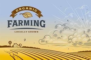 Organic Farming Landscape