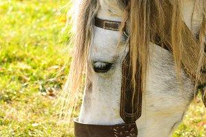 Horse graze macro