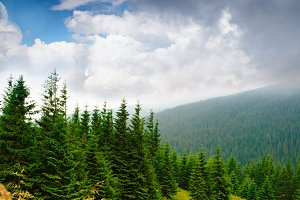 Mountains landscape with pine forest