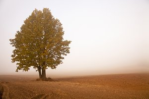 tree in a fog