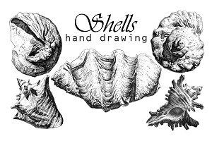 Realistic seashells.