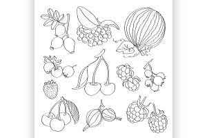 Set of different berries