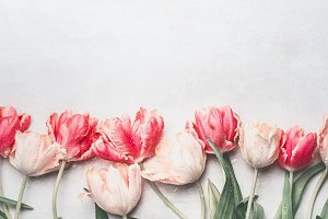 Banner with pastel tulips flowers
