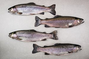 Fresh fish trout