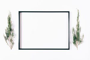 Black frame and spruce branches