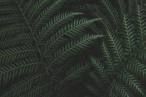 Low Key Ferns