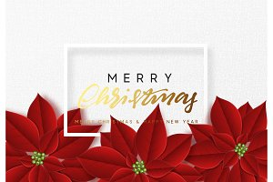 Merry Christmas, background decorated with beautiful red buds poinsettia flowers