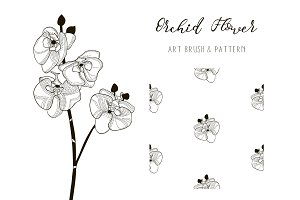 Orchid Flower Design. Art Brush and Pattern. Vector