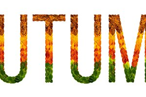 word Autumn is written with leaves white isolated background, banner for printing, creative illustration of colored leaves.