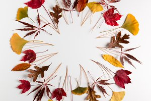 Circle frame of autumn leaves