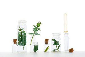 Plants in the glass bottles