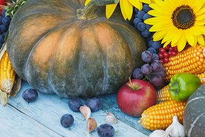 Pumpkin, corn and different ripe vegetables and fruits