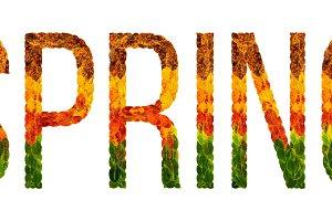 word spring written with leaves white isolated background, banner for printing, creative illustration of colored leaves.