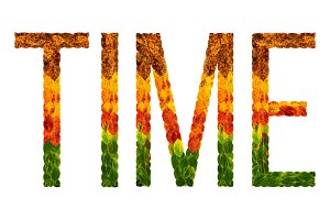 word time written with leaves white isolated background, banner for printing, creative illustration of colored leaves.
