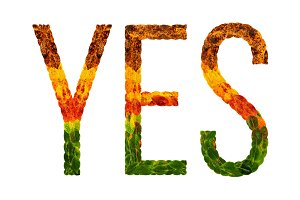 word yes written with leaves white isolated background, banner for printing, creative illustration of colored leaves.