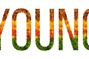 word young written with leaves white isolated background, banner for printing, creative illustration of colored leaves.