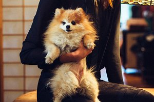 Woman hold cute pomeranian dog