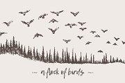 Birds flying over a fir forest