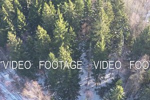 Conifers and birches in winter mixed forest, aerial view