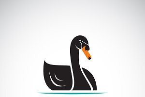 Vector of a black swan design. Logo.