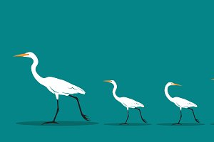 Vector of walking bird. Difference.