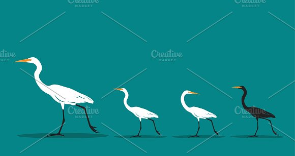 Vector Of Walking Bird Difference