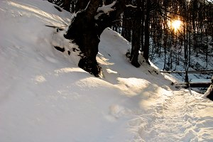 Winter sunrays in forest