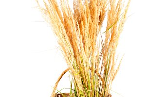 Dry grass in basket