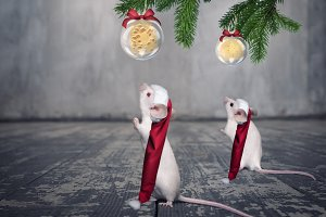 Funny white mouses in Christmas hats.