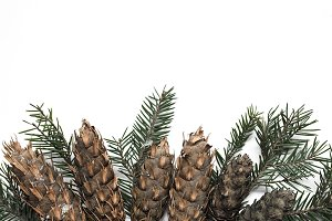 Spruce branch styled stock photo