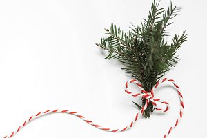 Spruce branch tied with ribbon stock