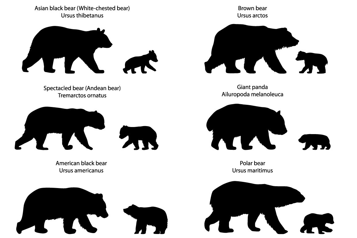 Silhouettes Of Bears And Bear Cubs Illustrations