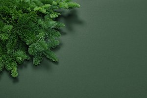 Pine branches Christmas background