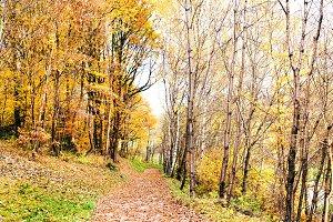 A path through the autumn forest.