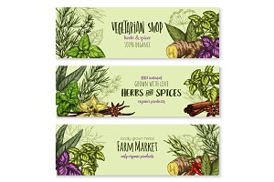 Herb, hot spice and food condiment sketch banner
