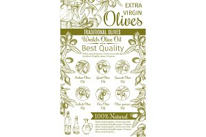 Olive oil sketch banner of green fruit and branch