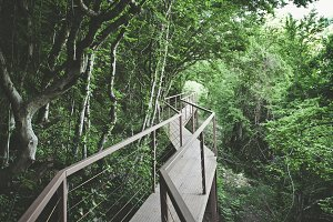 Panorama view of Iron Bridge in tropical forest