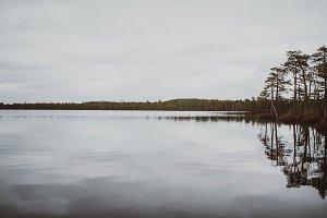 Autumn bog lake stock photo