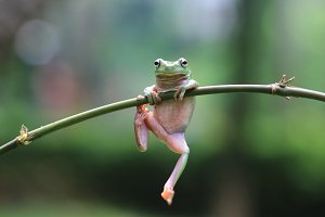 frog, animal, nature,