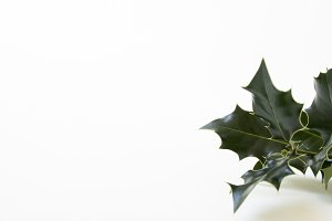 Green Christmas | Holly