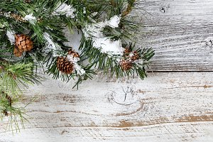 Snow on Fir Branches